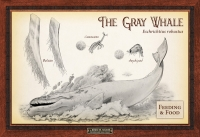 The Gray Whale Feeding & Food